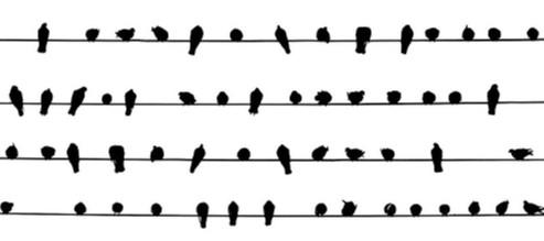 4 wire birds
